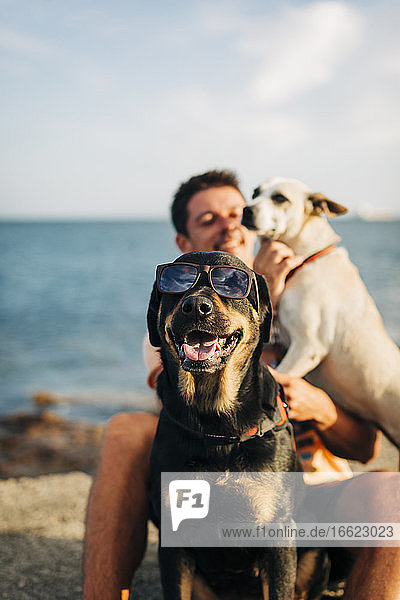 Dog wearing sunglasses sitting at beach with man playing in background