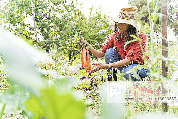 Smiling woman harvesting organic carrots at vegetable garden