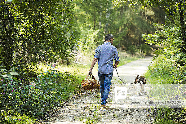 Mature man holding basket of mushroom while walking with dog in forest