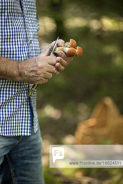 Close-up of mature man cutting mushroom with knife in forest