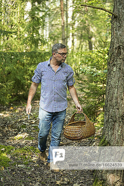 Mature man walking with basket looking for mushroom in forest
