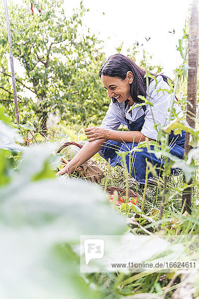 Happy woman harvesting organic vegetables from garden