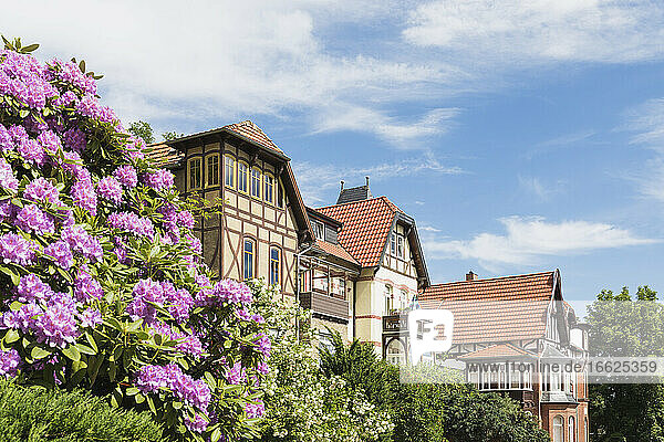 Germany  Thuringia  Eisenach  Flowers blooming in front of historical villas in Predigerberg/Hainstein quarter