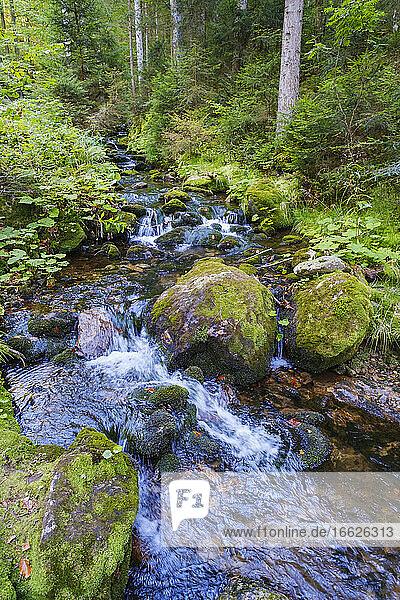 Sollerbach river flowing through Bavarian Forest