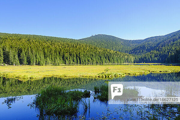 Scenic view of Kleiner Arbersee lake and surrounding spruce forest in summer