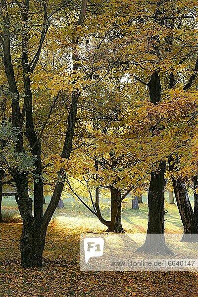 Herbst in der Natur mit bunten Blättern.