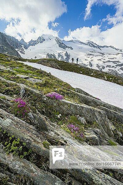 Wanderer vor schneebedeckten Berge  hochalpine Landschaft mit Gletscher Furtschaglkees  Berliner Höhenweg  Zillertaler Alpen  Zillertal  Tirol  Österreich  Europa