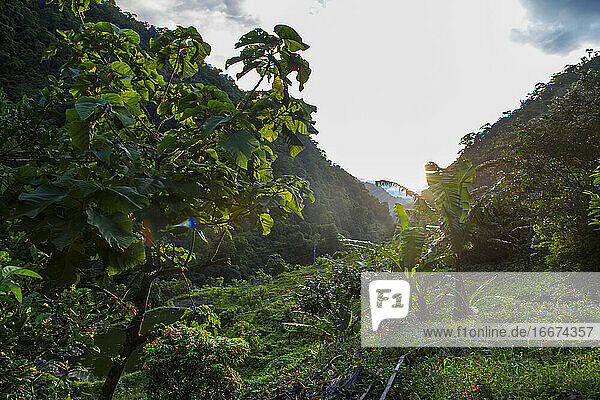 lush vegetation in a valley in the Columbian jungle