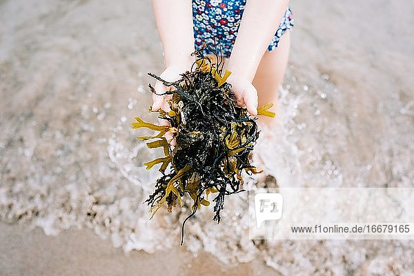 child holding seaweed collected from the sea at the beach in summer