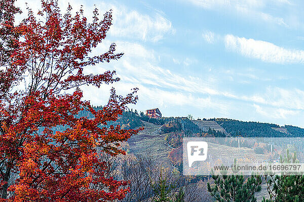 Vibrant orange tree leaves and mountain cabin in the distance.