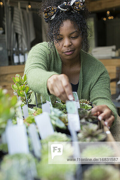 Female shop owner arranging succulent display in plant nursery