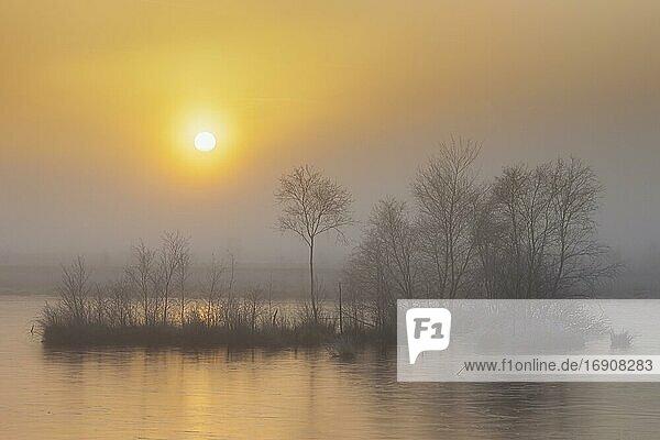Winter im nebligen Moor  Frost  Winter  Kälte  Sonnenuntergang  Baumgruppe  Goldenstedter Moor  Deutschland  Europa