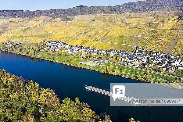 Luftaufnahme  Weinberge im Herbst  Graach  Region Bernkastel-Kues  Mosel  Rheinland-Pfalz  Deutschland  Europa