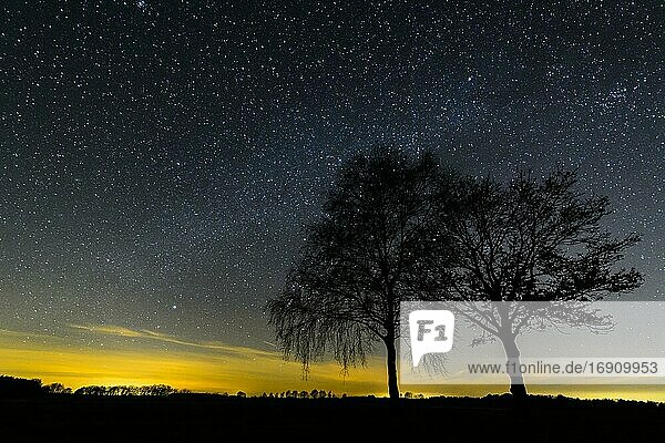Starry sky over trees  night  star  milky way  Oldenburger Münsterland  Goldenstedt  Lower Saxony  Germany  Europe