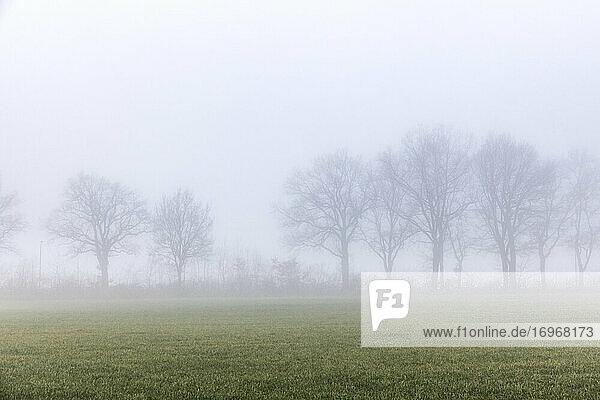 Nebliger Morgen in der Feldmark von Schenefeld (Kreis Pinneberg). Schwach zeichnen sich die kahlen Baumkronen durch den Nebel ab