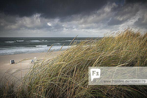 Blick vom Roten Kliff in Kampen/Sylt über im Wind wehende Strandhafer-Halme auf die letzten drei Strandkörbe  die zum Saisonende auf ihren Abtransport ins Winterlager warten. Im Hintergrund Hintergrund kräftige Nordseebrandung