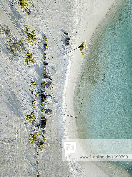 Sunshades and palm trees on tropical beach  aerial view