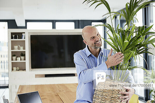 Businessman embracing potted plant while sitting on table at home