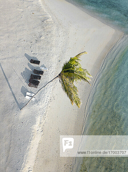 Single palm tree and sun loungers on tropical island  aerial view