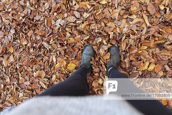 Woman standing on autumn leaves in Cannock Chase woodland