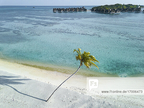 Single palm tree on tropical island with bundalows in background  aerial view