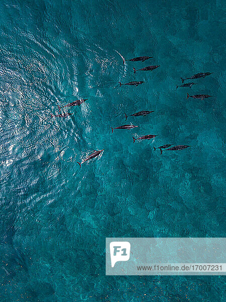 Dolphins swimming in sea  aerial view