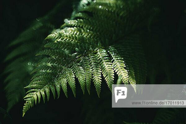 Green fern growing in forest