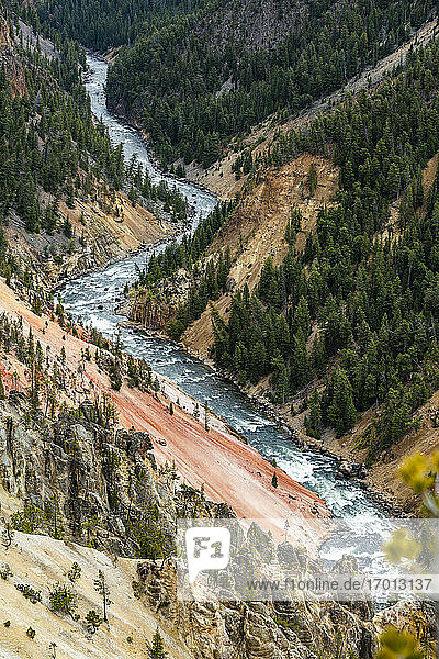 USA  Wyoming  Yellowstone National Park  Yellowstone River fließt durch den Grand Canyon im Yellowstone National Park