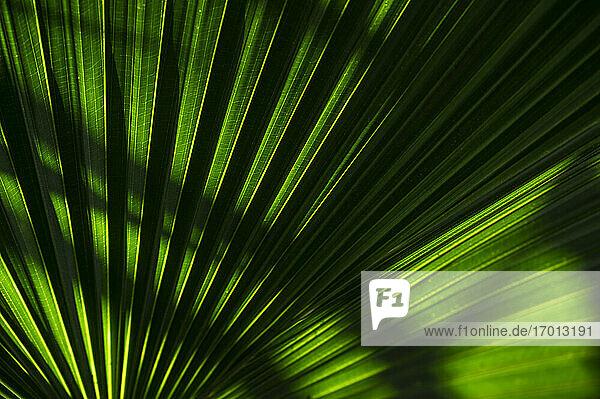 Nahaufnahme von grünen Palmenblättern