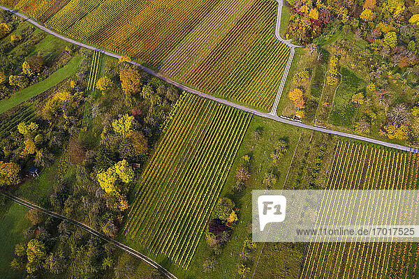 Aerial view of autumn vineyards  Baden-Wurttemberg  Germany