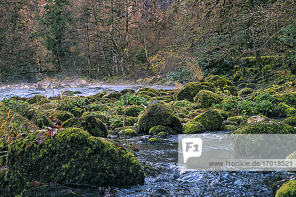 Lupshara River flowing past moss-covered boulders in Ritsa Relict National Park