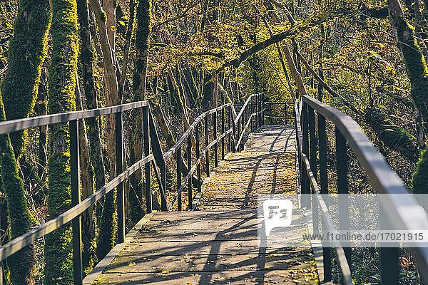 Empty boardwalk in mossy forest