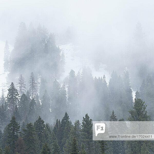 USA  Idaho  Cascade  Wolken und Nebel über Wald in Cascade Range