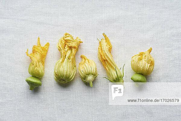 Frische Zucchiniblüten auf weissem Leinenhintergrund