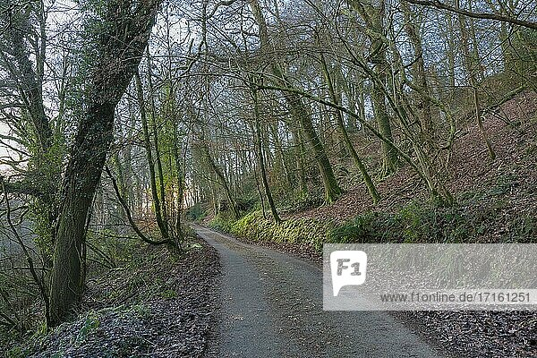 A country lane though woodland during winter at Bampton  Devon.