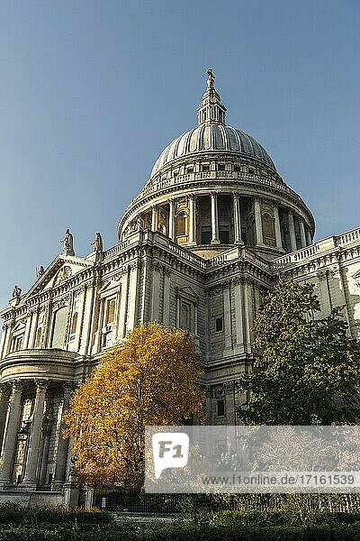 St Pauls Cathedral  a London tourist attraction landmark with colourful orange autumn trees in the city  shot in Coronavirus Covid-19 pandemic Lockdown  England  UK  Europe