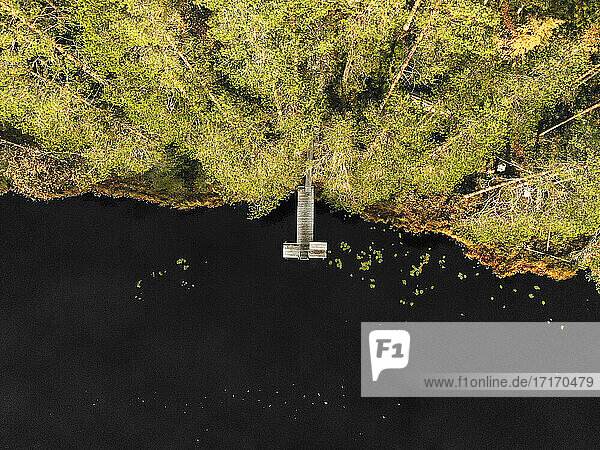 Aerial view of pier over lake in forest during sunny day