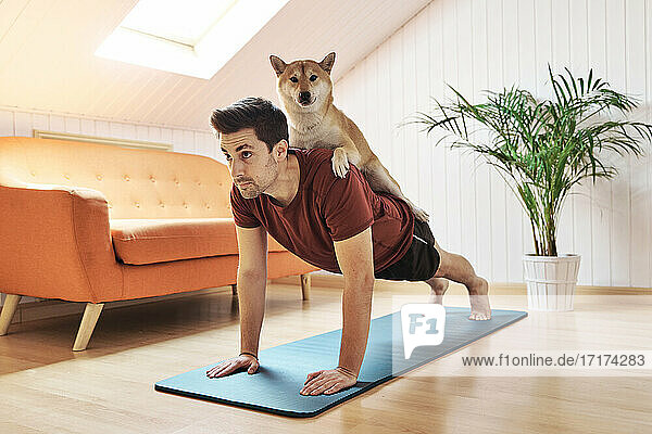 Man exercising with pet dog on his back