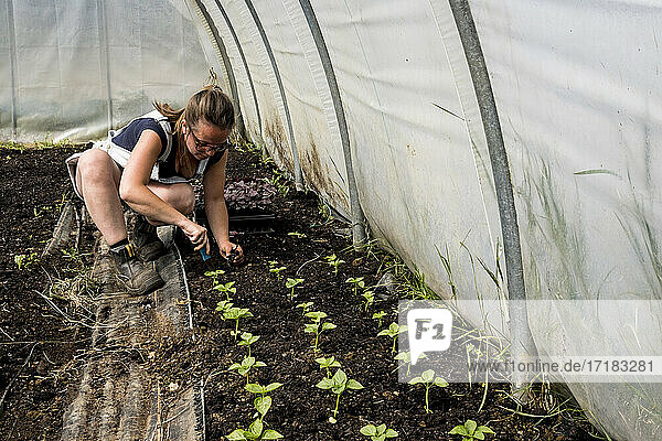 Woman kneeling in a poly tunnel  planting seedlings.