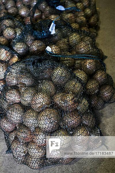 Nahaufnahme aus hohem Winkel von Netzen mit frisch gepflückten Zwiebeln.