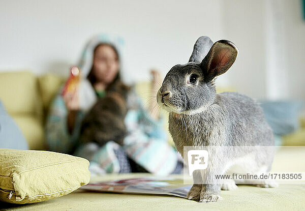 Portrait of house rabbit indoors with woman on sofa in background