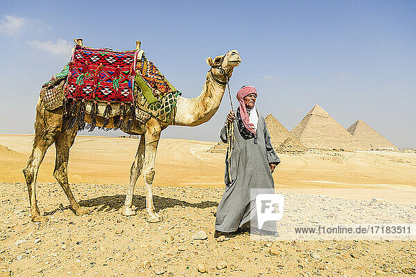 Three pyramids  tombs of the pharaohs Khufu  Khafre  and Menkaure  a tourist guide holding a camel