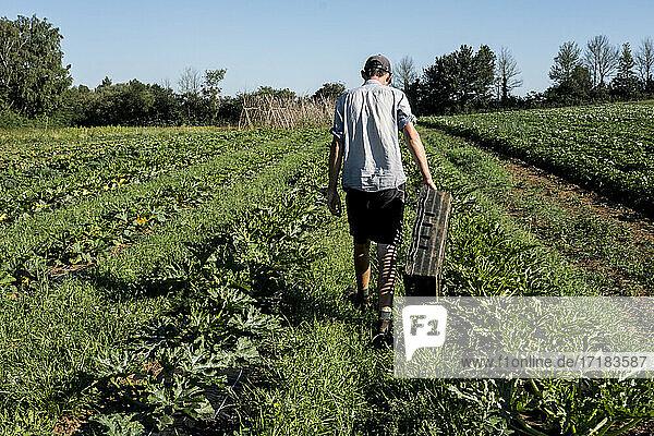 Rückansicht eines Mannes  der entlang der Gemüsereihen auf einem Bauernhof geht.