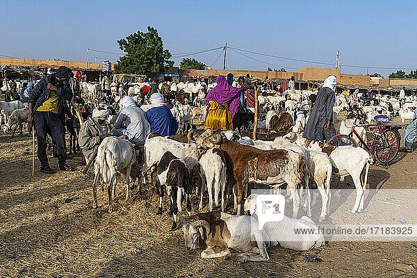 Animal market  Agadez  Niger  Africa