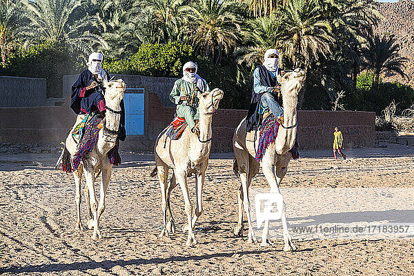 Traditional dressed Tuaregs on their camels  Oasis of Timia  Air Mountains  Niger  Africa