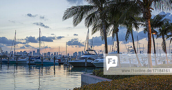 Panoramic view across marina from South Pointe Park  dusk  Downtown Miami in background  South Beach  Miami Beach  Florida  United States of America  North America