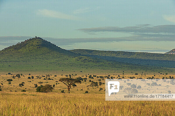 View of Lualenyi  Tsavo Conservation Area  Kenya  East Africa  Africa
