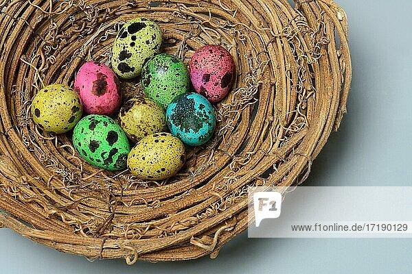 Gefärbte Wachteleier in Nest  Ostereier  Deutschland  Europa