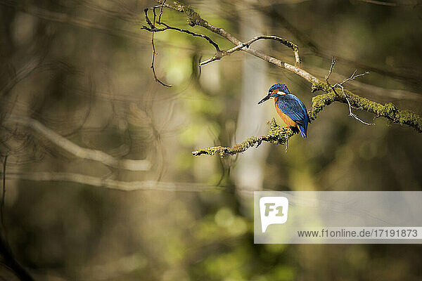 A colourful kingfisher bird perched on a branch
