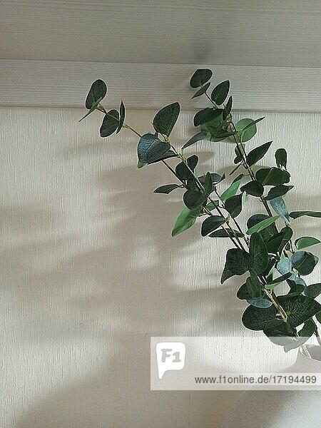 Eucalyptus branches in an interior vase